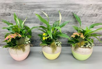 Planted Spring Arrangement - Kalanchoe & Peace Lily