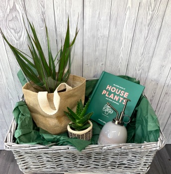 The House Plant Gift Basket with Two Plants