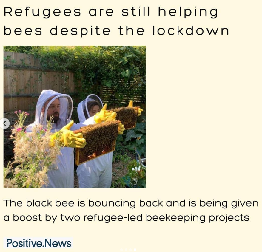 refugees bees