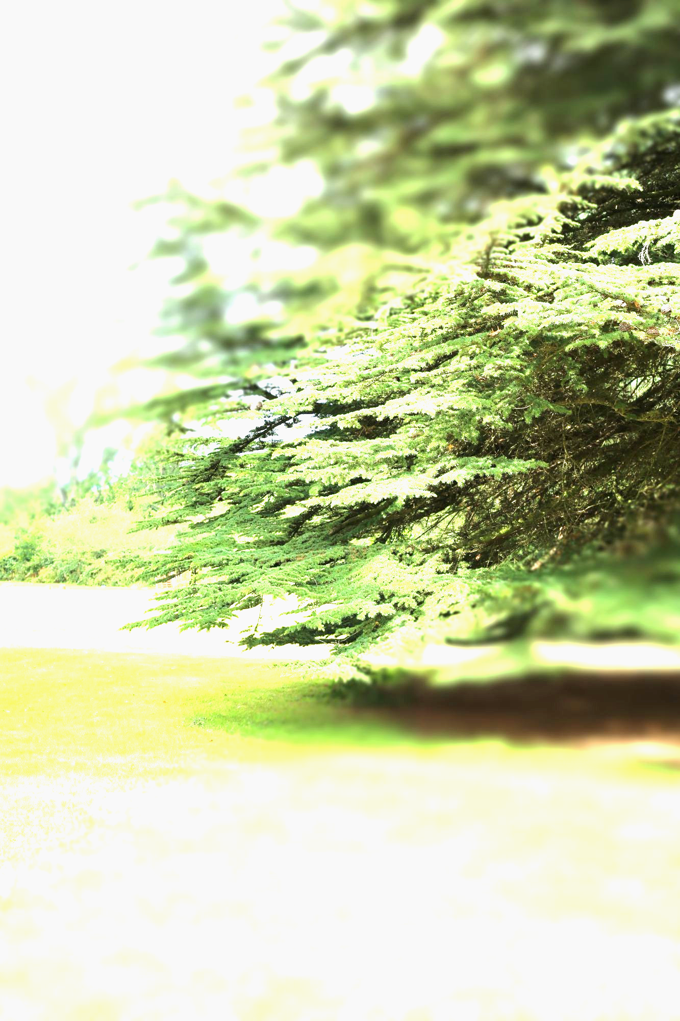Dr Richard Watts
