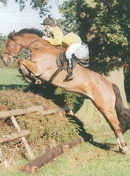 hedge jumping