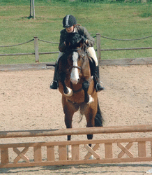 working hunter fence