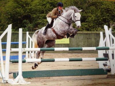 grey horse showjumping