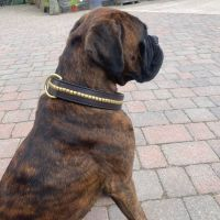 HAND STITCHED LEATHER AND BRASS COLLAR