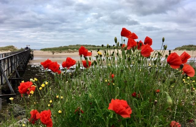 Poppies at Lossiemouth