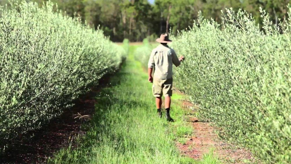 Comvita Olive Farm