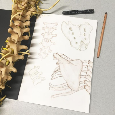 Small pencil studies of human bones in sketchbook page, beside replica human spine