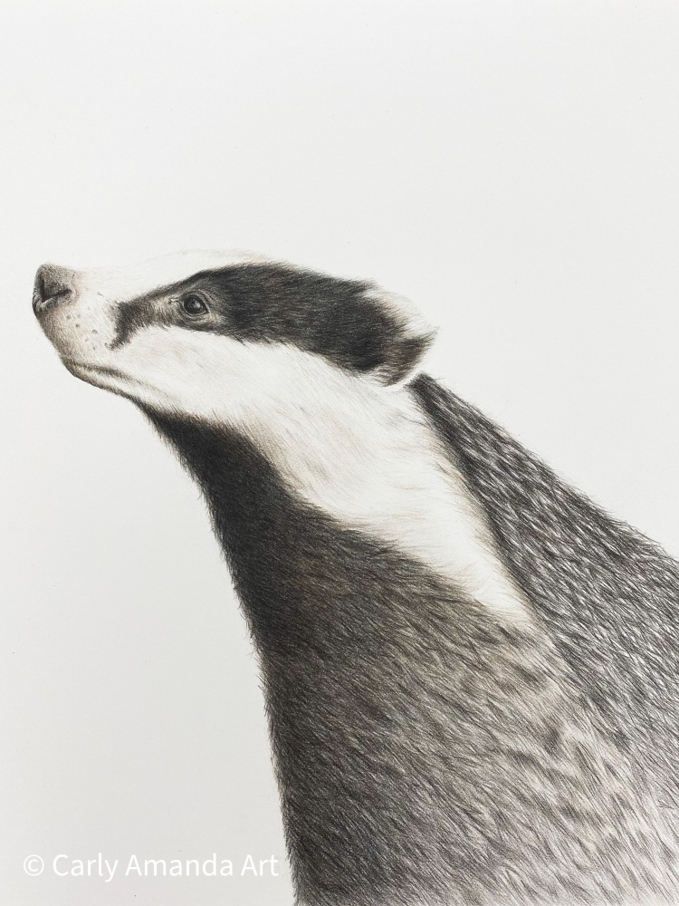 'Wise Mr Badger' Limited Edition Print