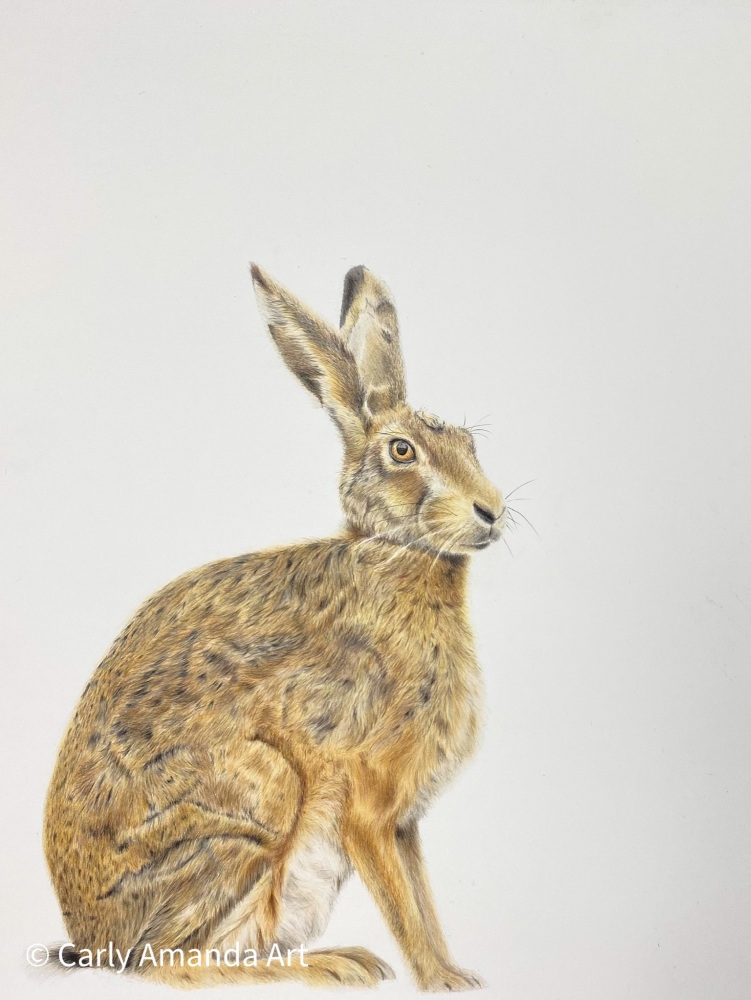 'March Hare' Limited Edition Print