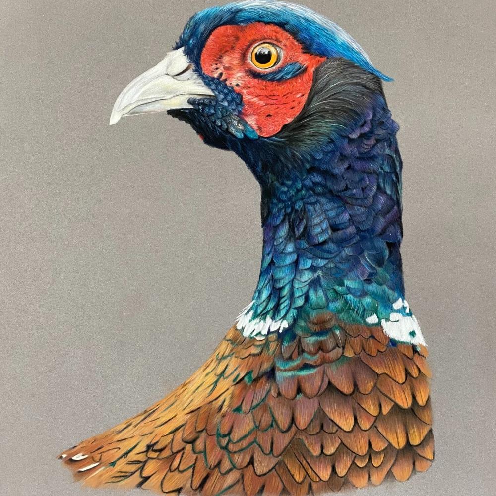 'Full Plumage Pheasant' Limited Edition Print