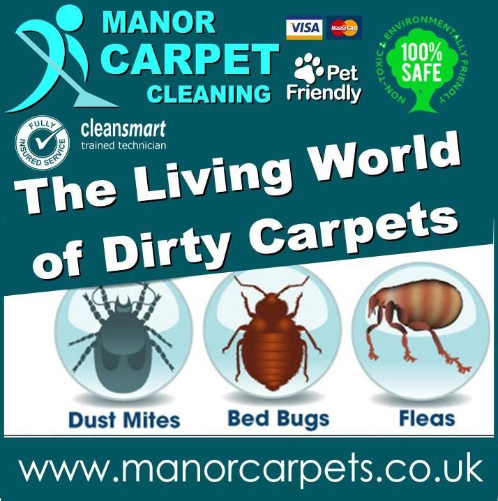 Carpet Cleaning pet smells and stains in Middlesbrough, Redcar, Thornaby, Stockton on Tees, Billingham