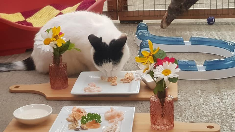 Feline gourmet meals