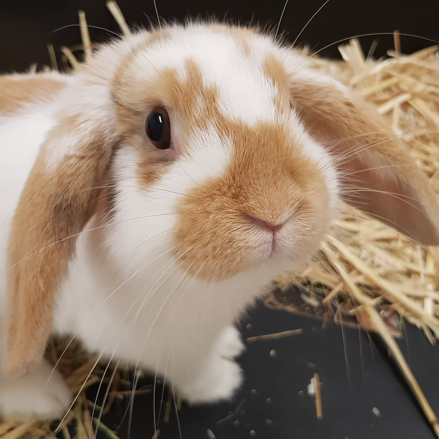 Does your rabbit need a holiday home?