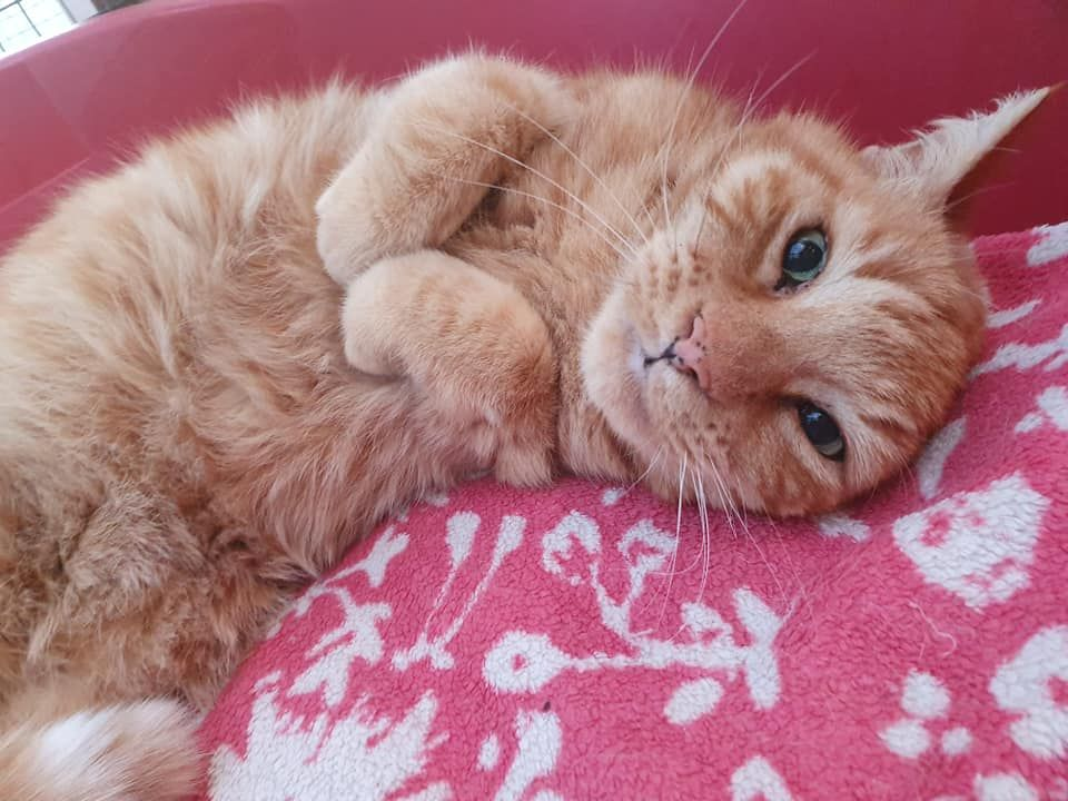 Cats feel at home at Kingstone Pet Boarding