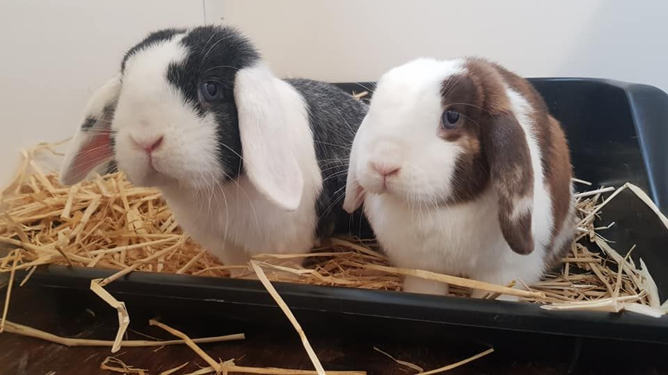 Bunnies can be housed in family groups
