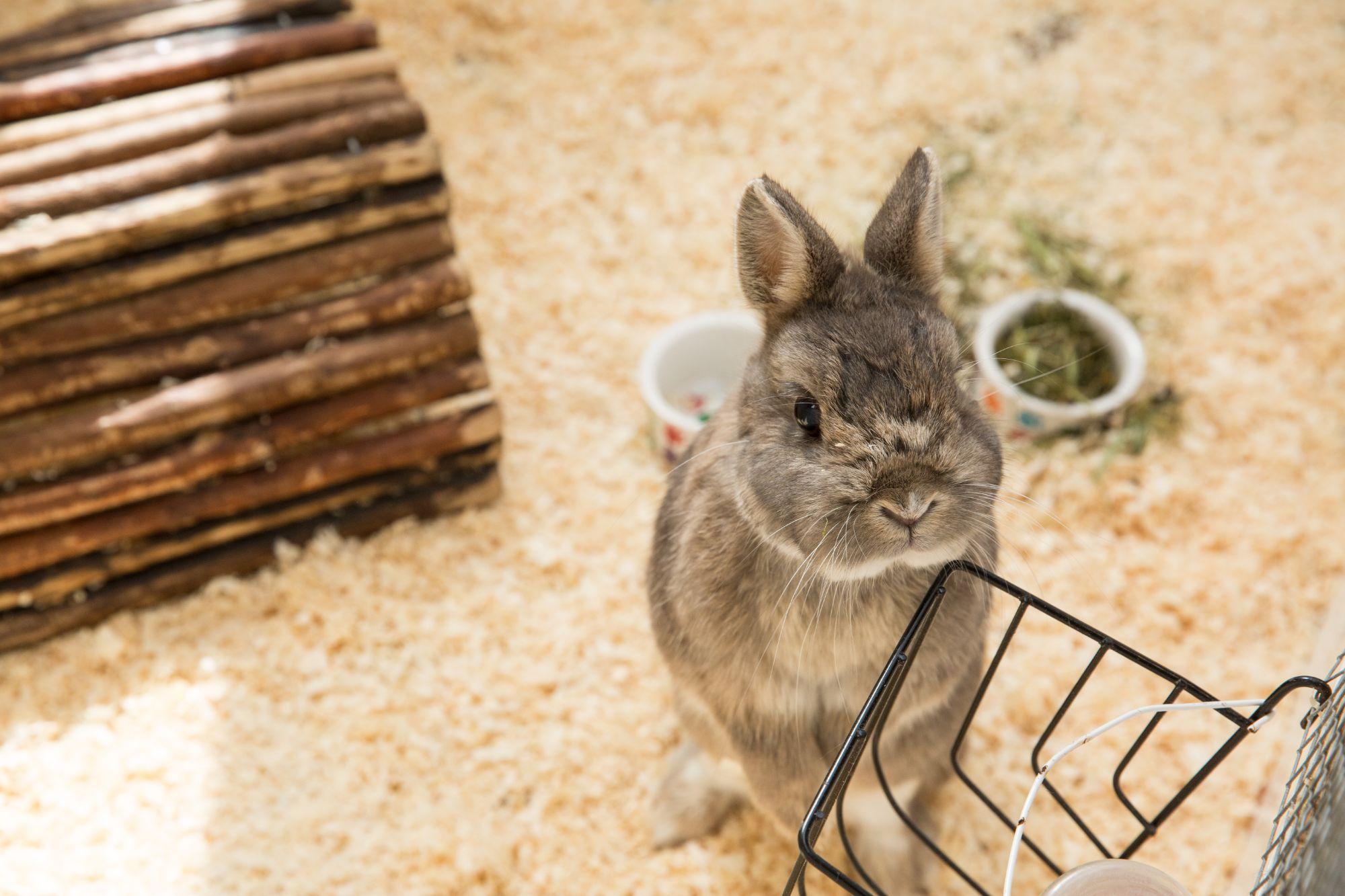 Rabbit hotel at Kingstone Pet Boarding