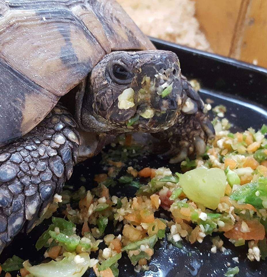 Tortoise accomodation
