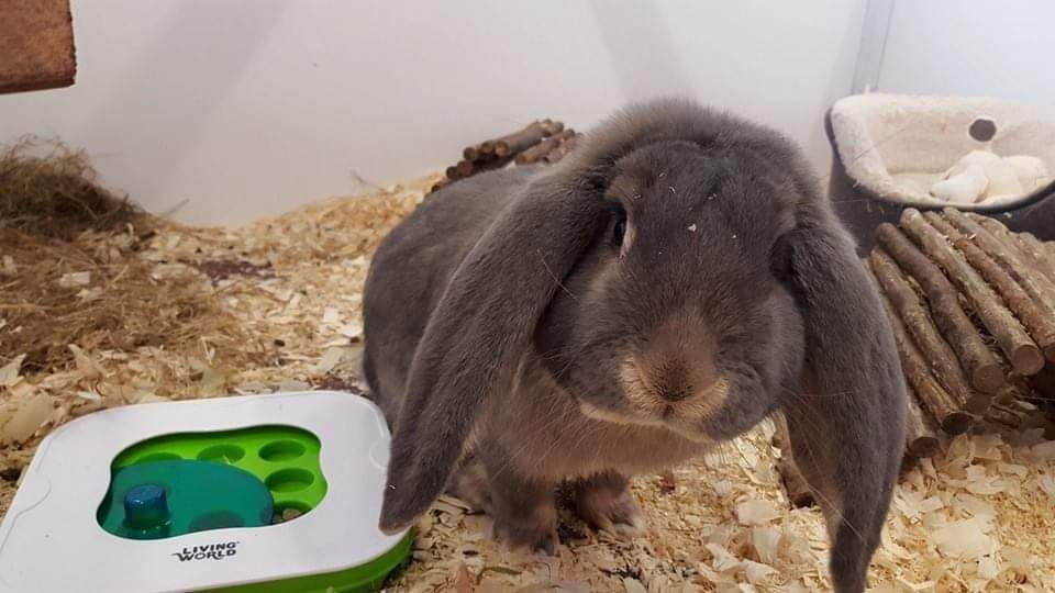 dedicated rabbit runs at Kingstone Pet Boarding
