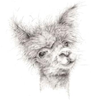 Alpaca Blank Card