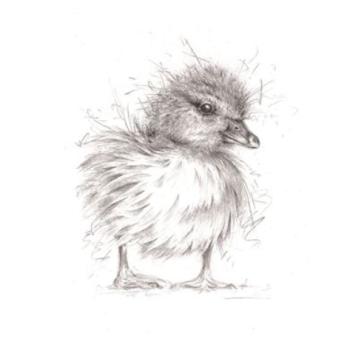 Duckling Blank Card