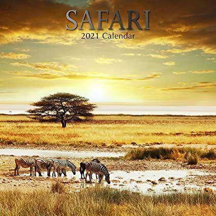 Safari 2021 - 16 Month Square Wall Calendar