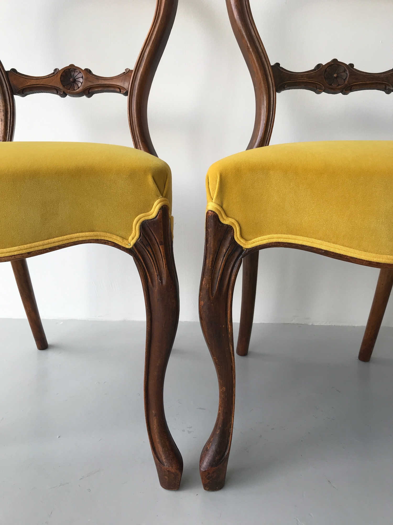 Victorian dining chairs in yellow velvet and Houles double cord by Spring Upholstery Brighton