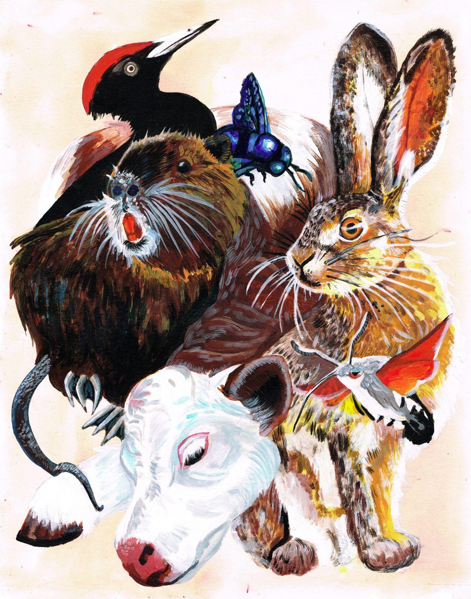 Phoebe Kirk - Animals
