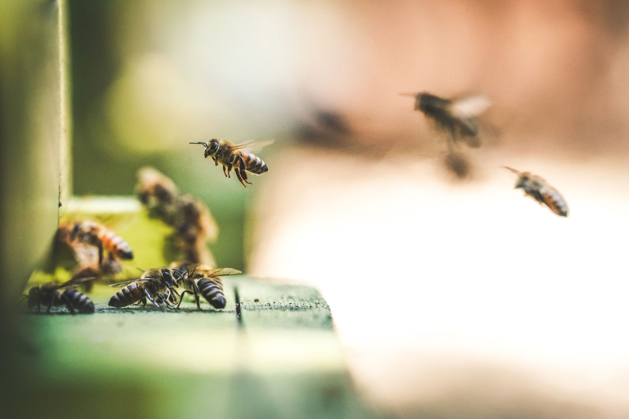A small group of bees collecting nectar from nearby wildlife