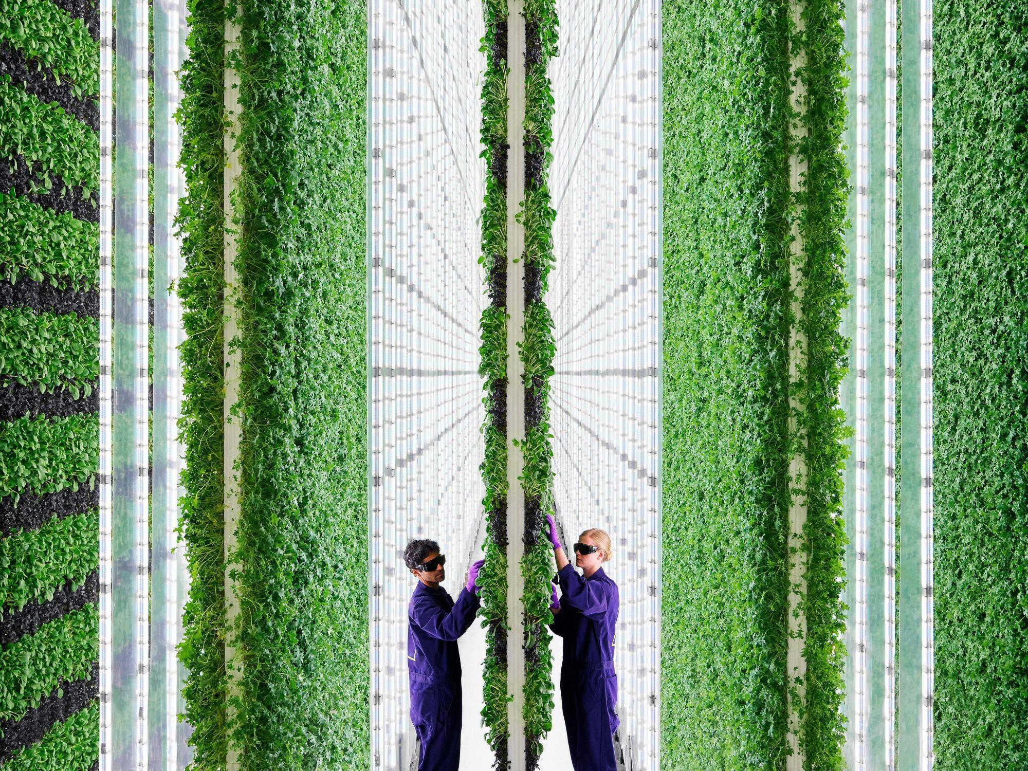 A photo of the Plenty indoor vertical farm in California