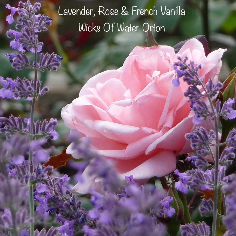 Lavender Rose and French Vanilla Fragrance