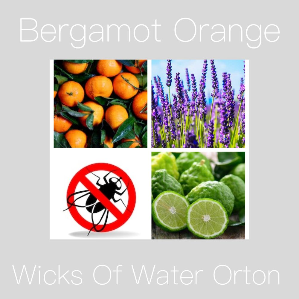 <!--010--> Bergamot Orange PRE SELL