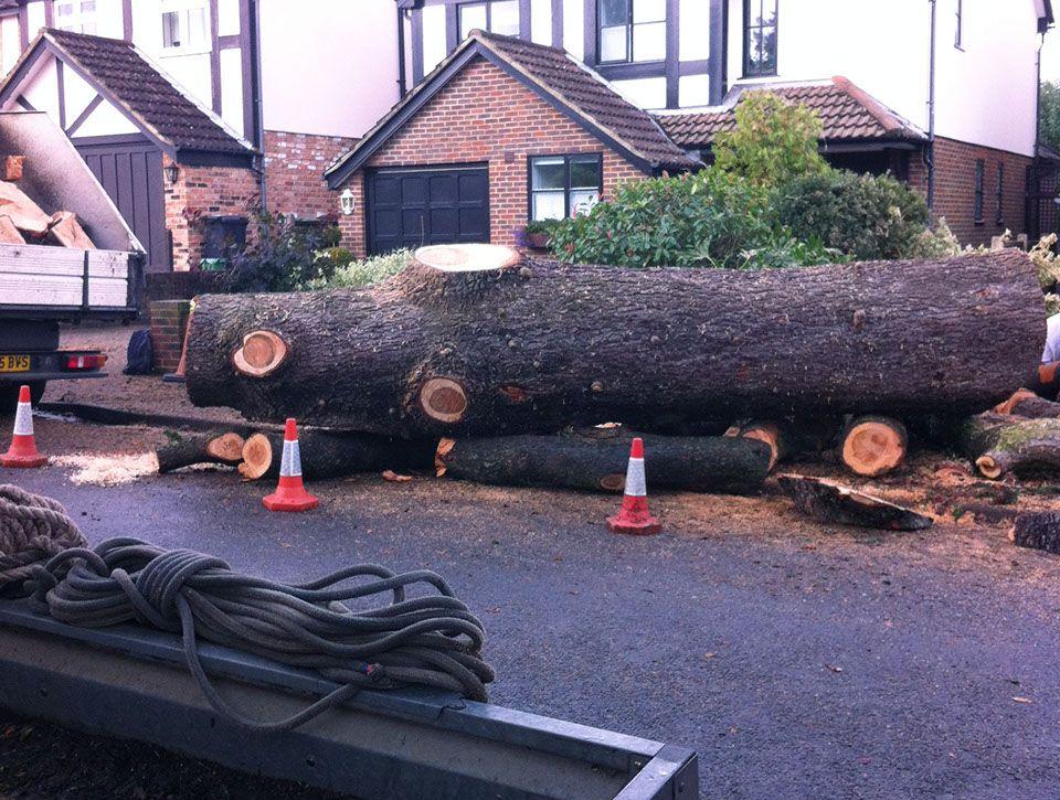 largetree-that-has-been-chopped-crop-u2872