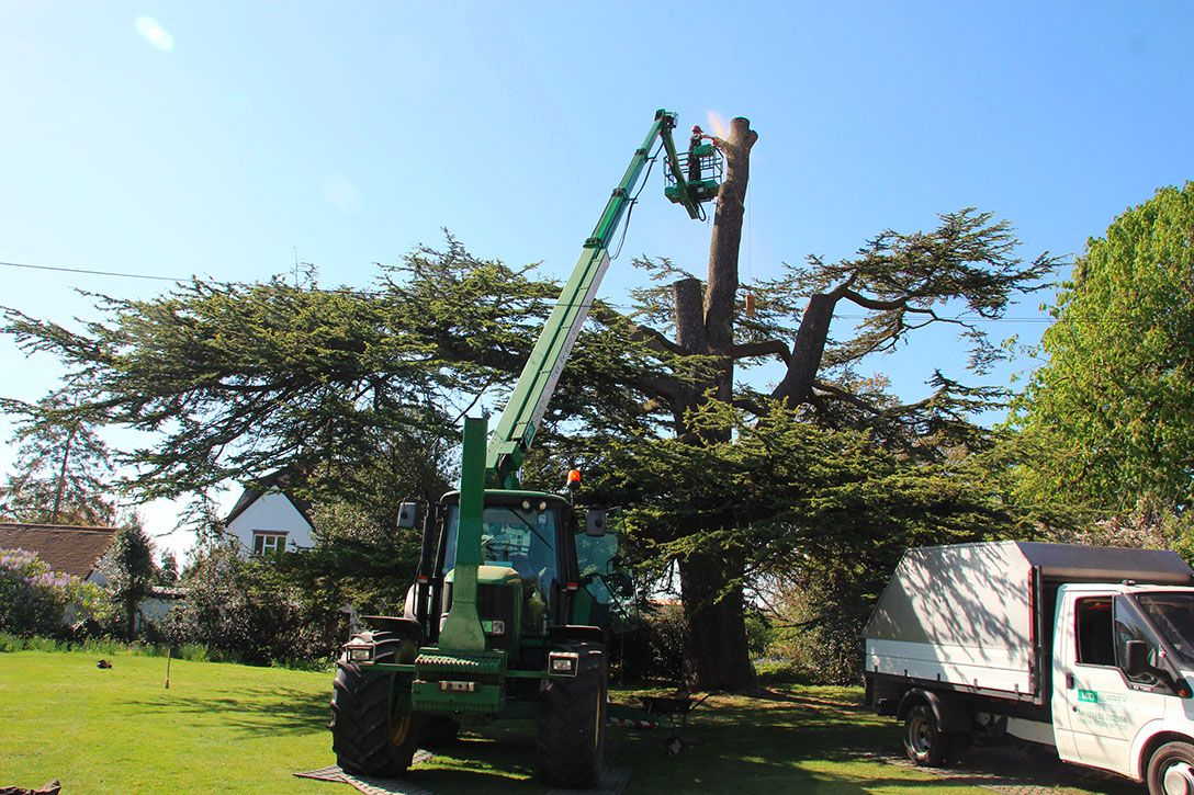 surgery-on-tree-in-surrey (1)