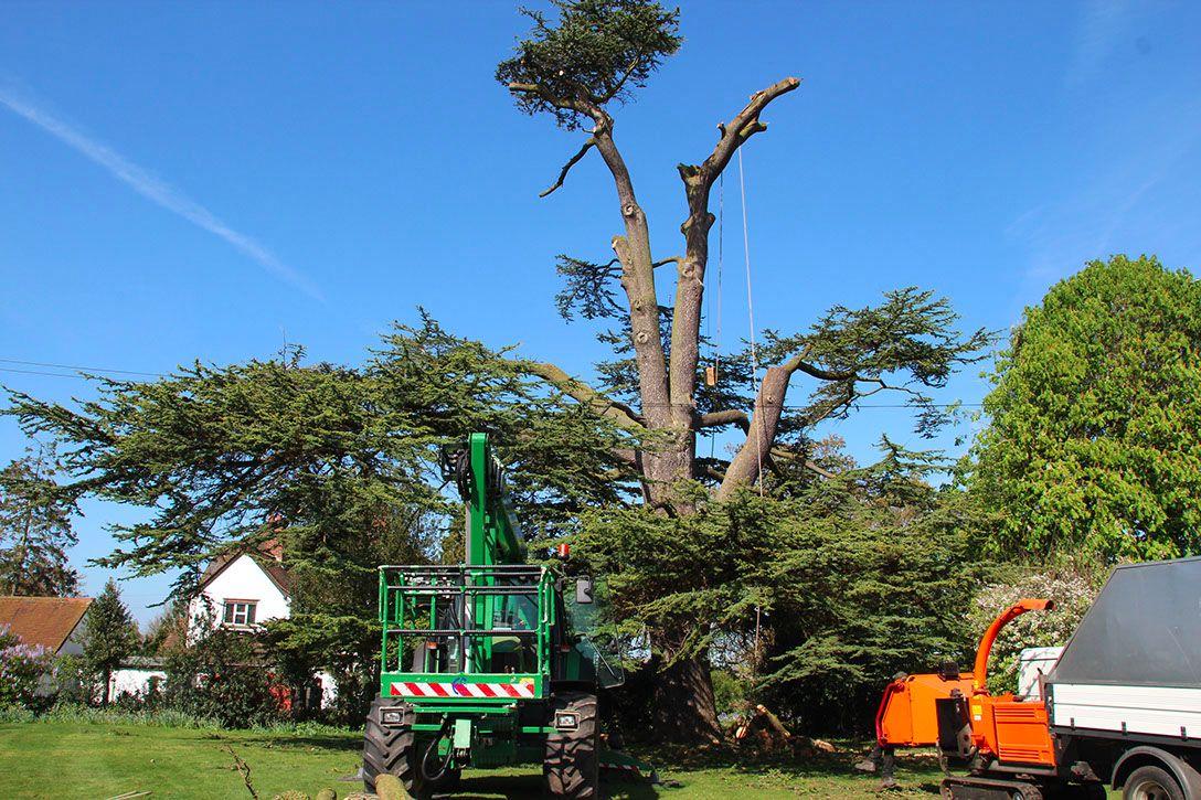 tree-surgery-happening-in-surrey