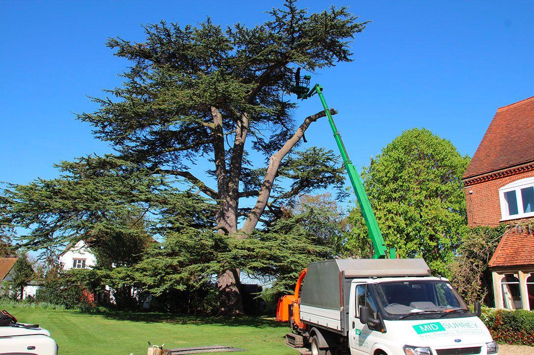 tree-surgery-in-surrey