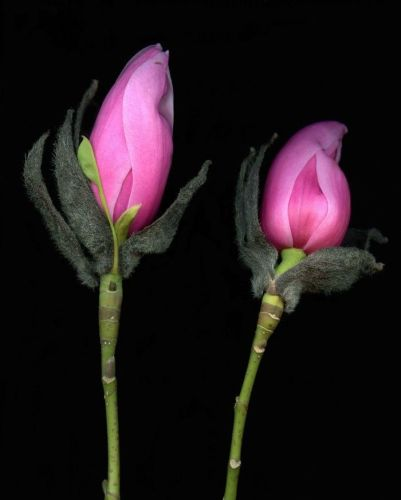 the use of flowers in meditation