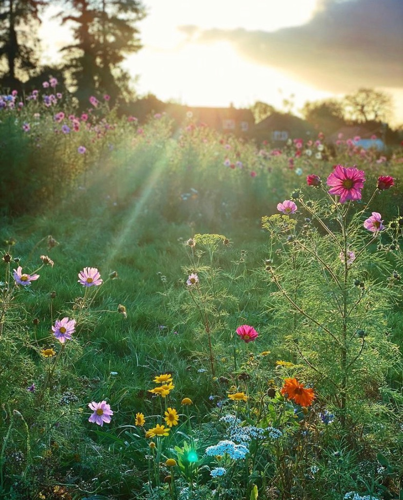 image of a beautiful meadow