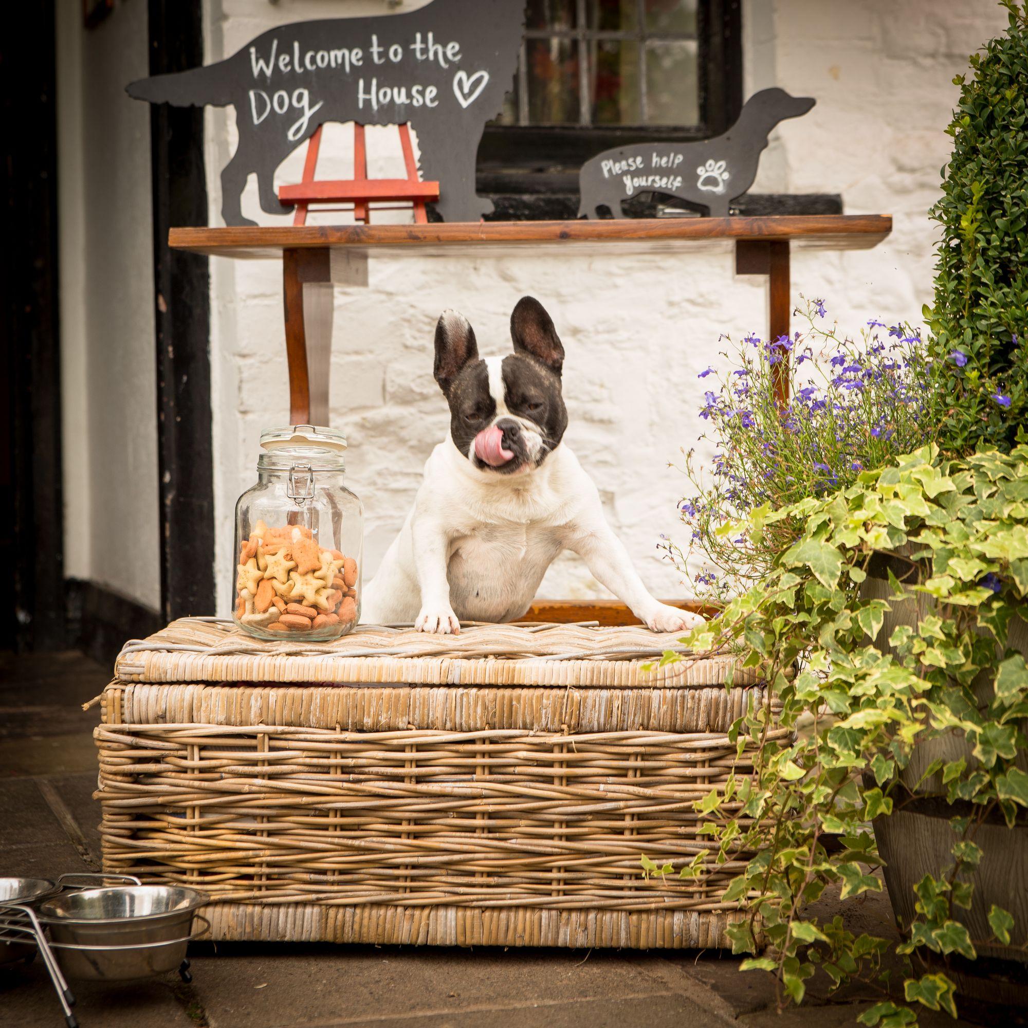 dog friendly pub and hotel