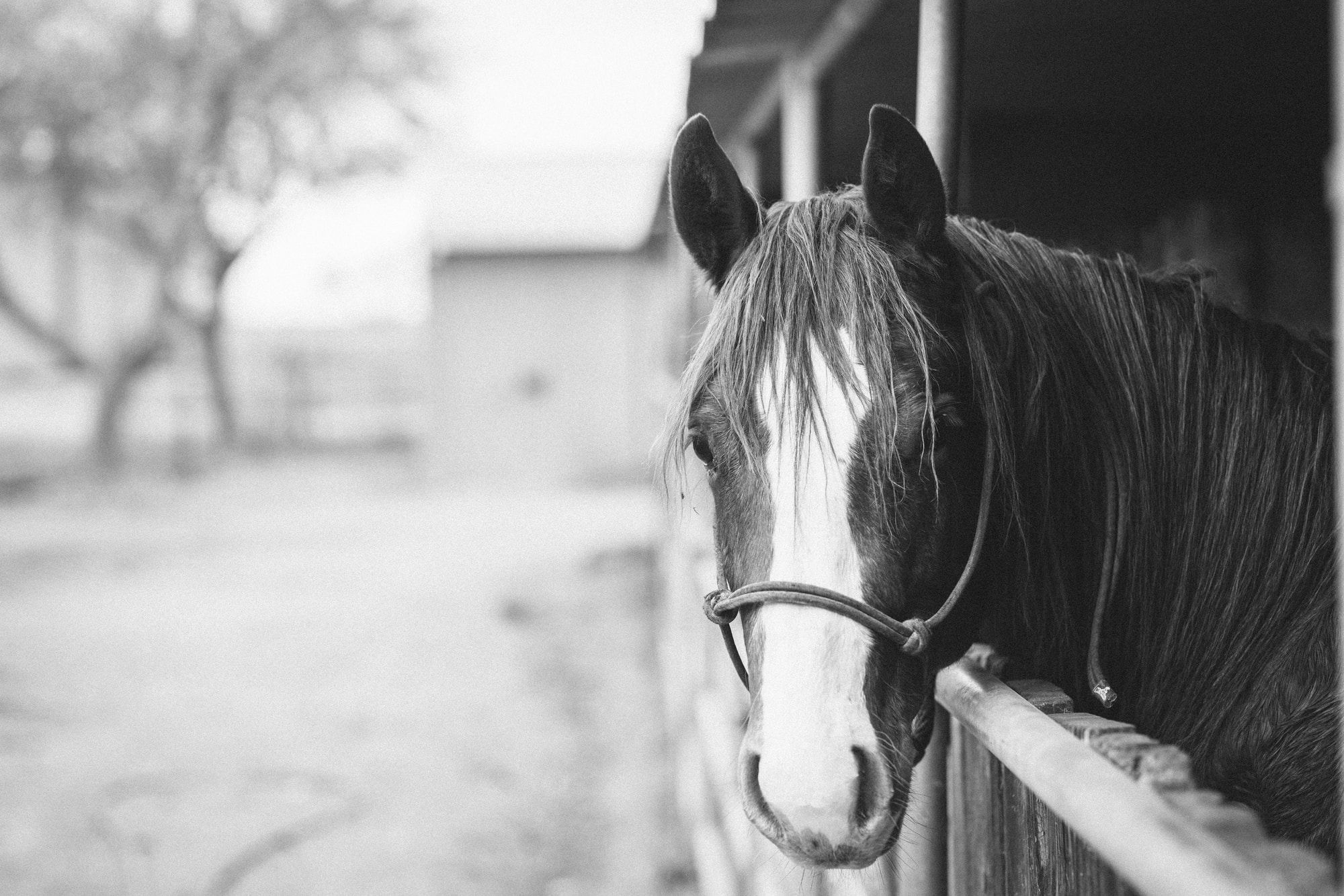 Help with Your Horse