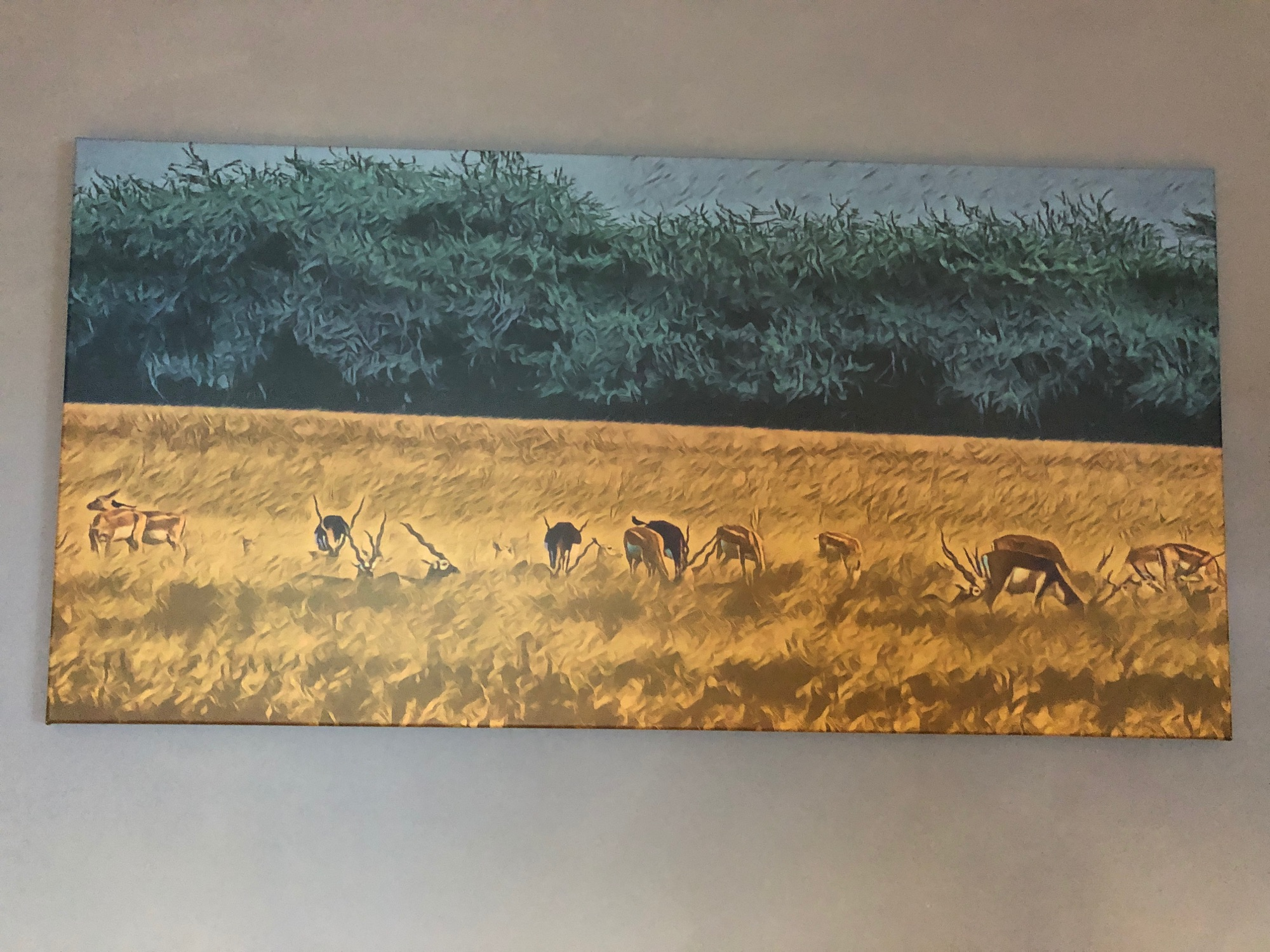 blackbuck canvas picture