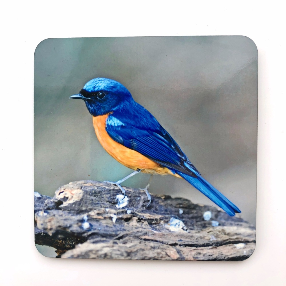 Rufous-bellied Niltava Coaster