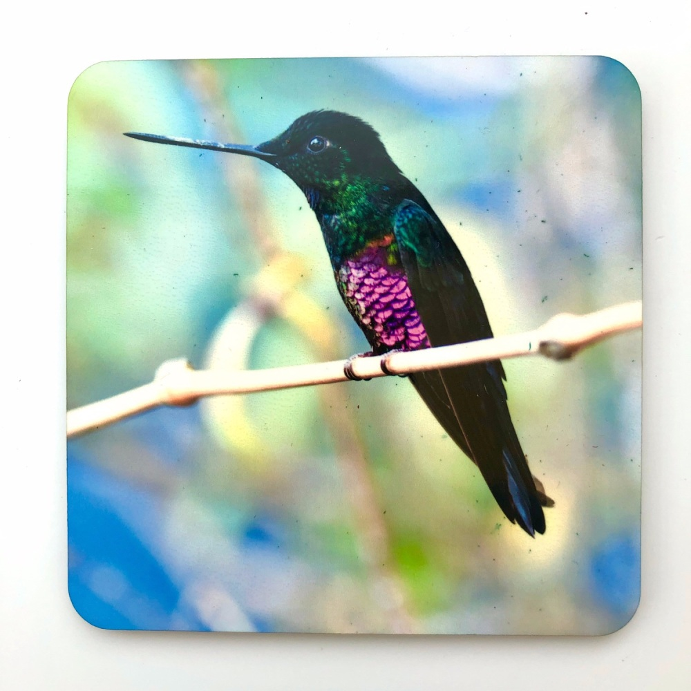 Blue-throated Starfrontlet Coaster