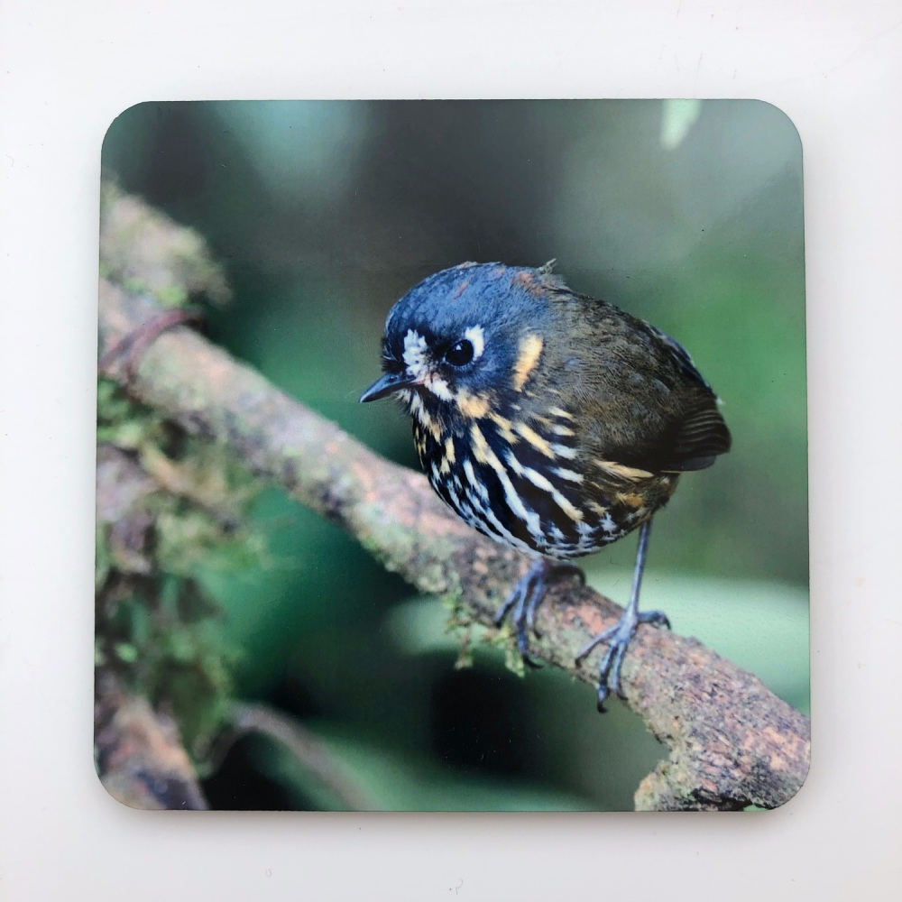 Crescent-faced Antpitta Coaster