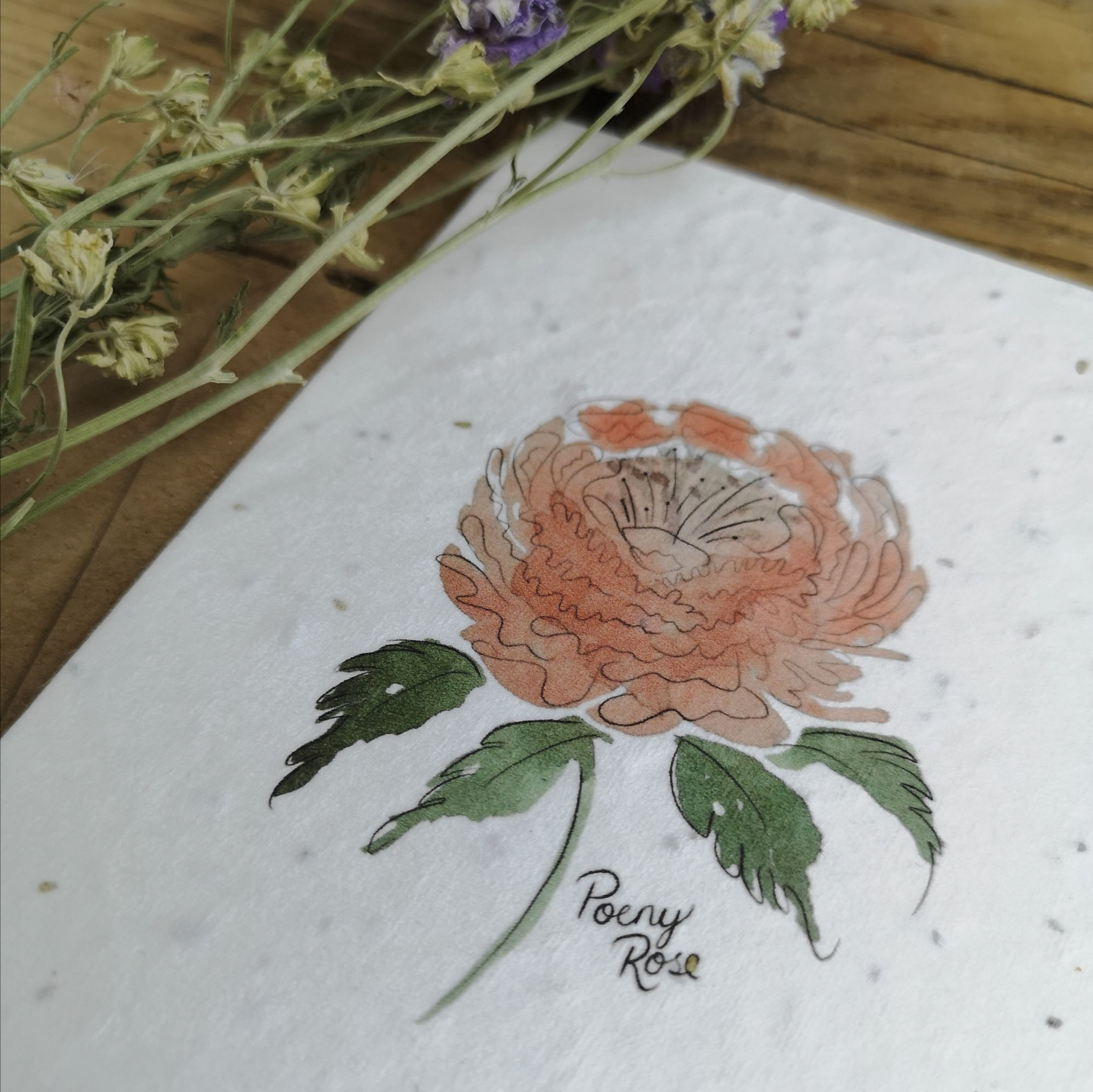Watercolour Poeny on Seed Paper