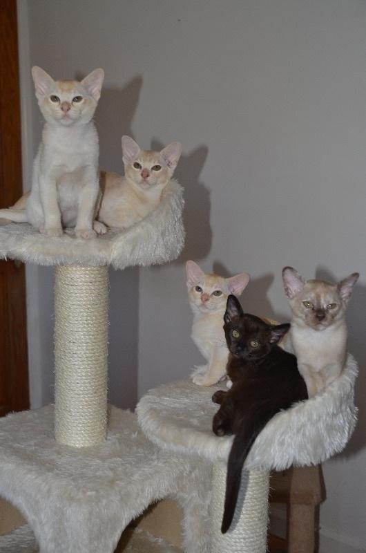 cats2014 (16)