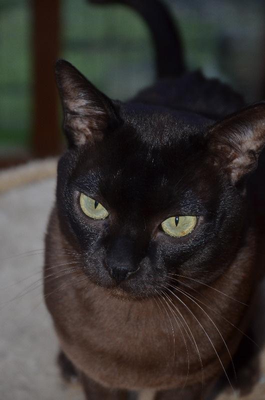 cats2014 (46)
