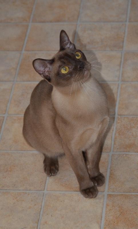 cats2014 (45)