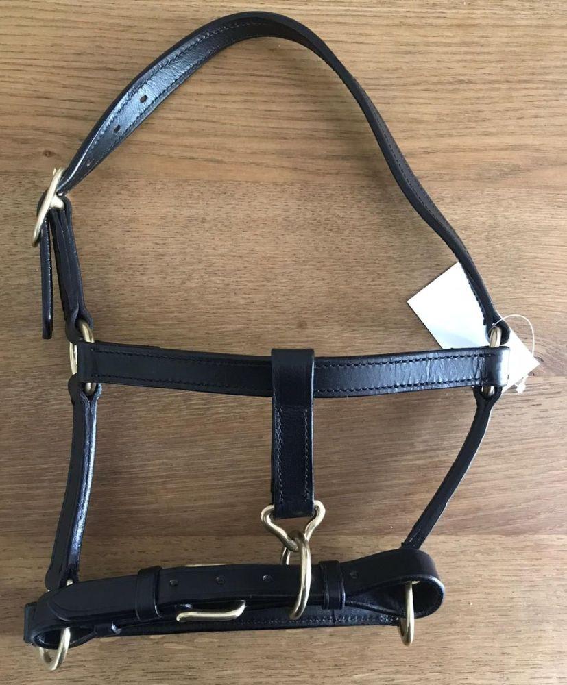 Foal Headcollar leather