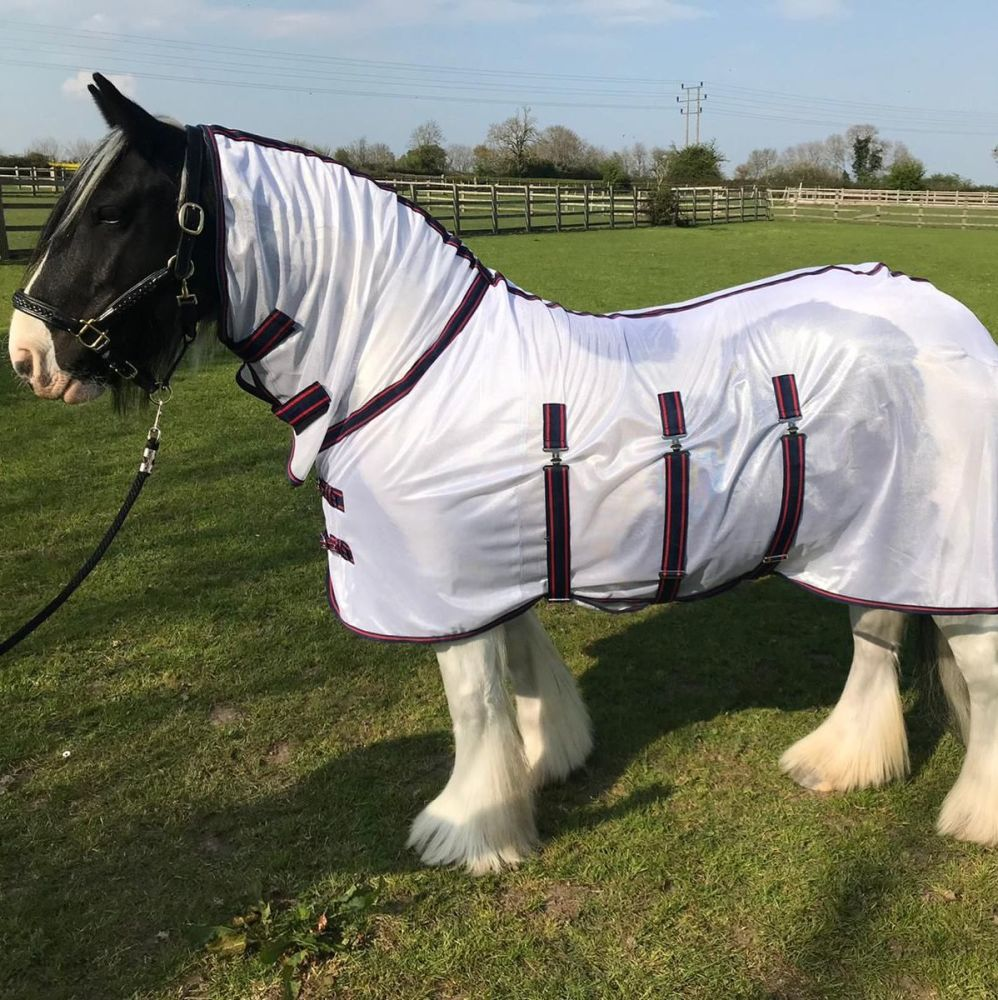 Fly Rug, Satin Lined, White with Navy and Red Trim