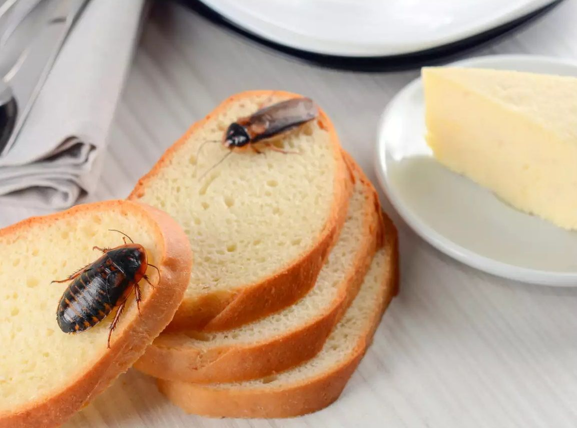 Cockroach Control and Removal